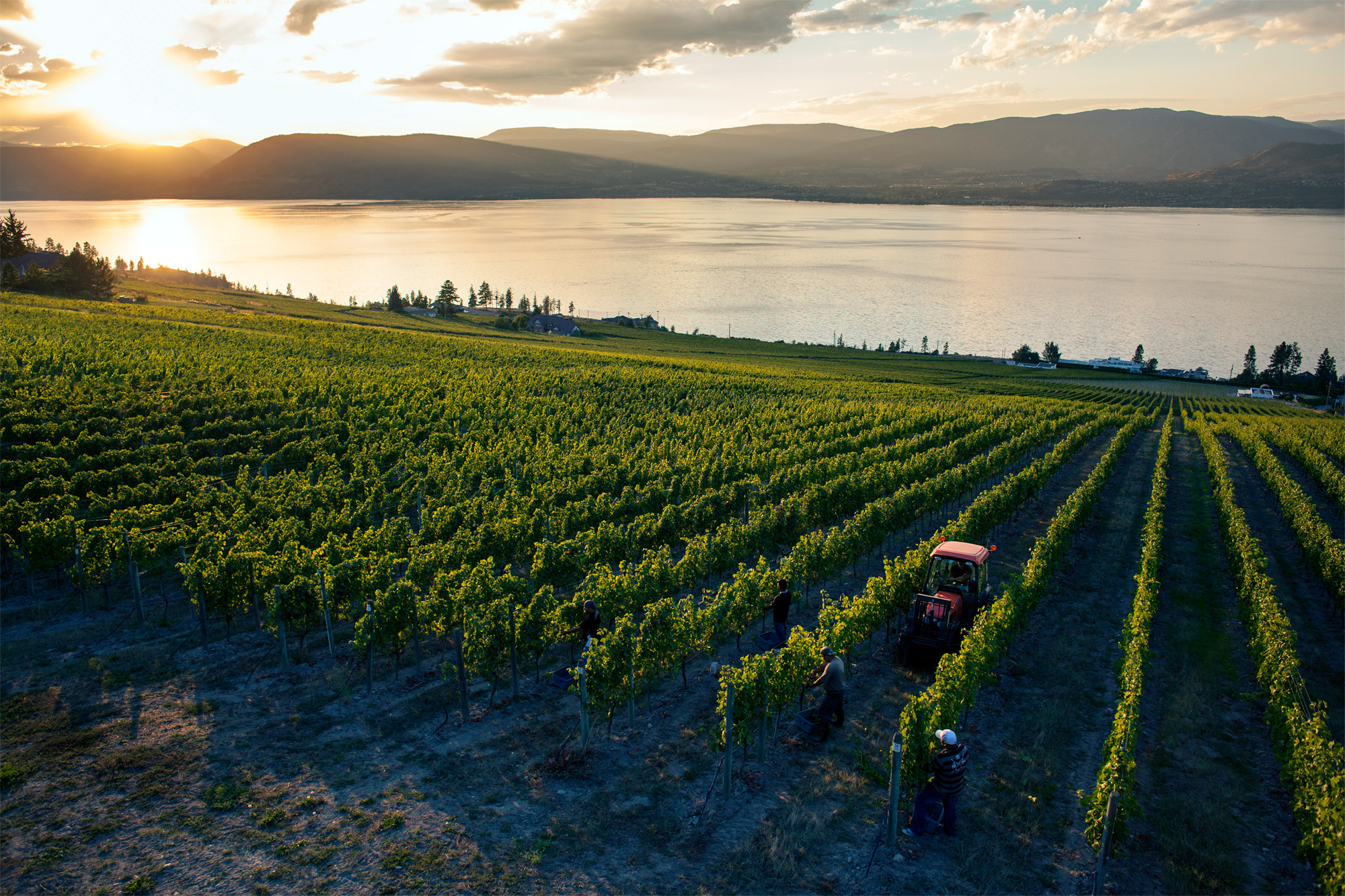 Kelowna Vineyards